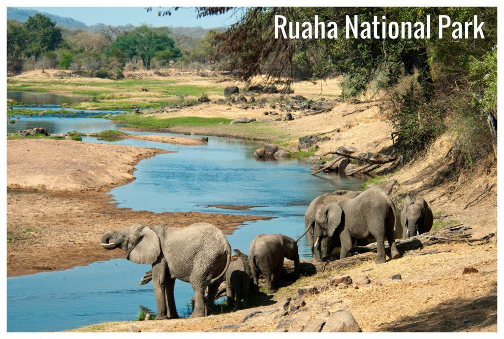 Los 4 Safaris que debes conocer si eres amante del mundo salvaje 2