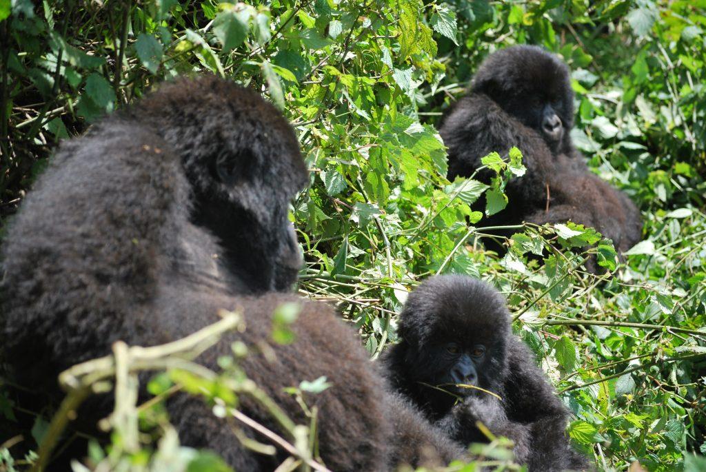 Los 4 Safaris que debes conocer si eres amante del mundo salvaje 1