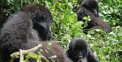 Los 4 Safaris que debes conocer si eres amante del mundo salvaje