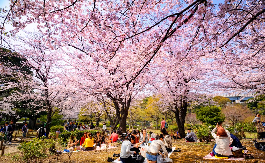 Cuándo viajar a Japón 2